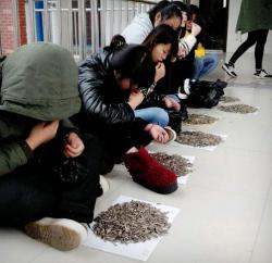 ครูดัดนิสัยนักเรียน ให้แทะเมล็ดทานตะวันกว่า 50 กก. ฐานกินขนมในห้อง