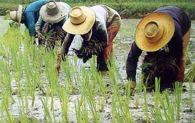 สอบครูผู้ช่วยวิชาเอกเกษตรกรรม
